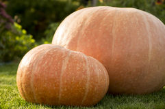 Big and small pumpkins. On the grass Royalty Free Stock Photos