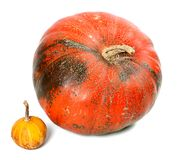 Big and small pumpkins Royalty Free Stock Images