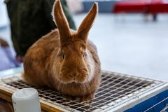Big and small rabbits. Cute lovely animal exhibition stock photo