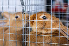 Big and small rabbits. Cute lovely animal exhibition stock images