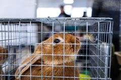 Big and small rabbits. Cute lovely animal exhibition royalty free stock photo