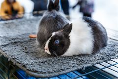 Big and small rabbits. Cute lovely animal exhibition Royalty Free Stock Photography