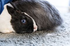 Big and small rabbits. Cute lovely animal exhibition stock image