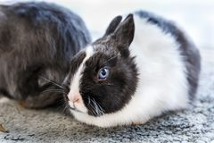Big and small rabbits. Cute lovely animal exhibition Royalty Free Stock Photos