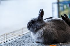 Big and small rabbits. Cute lovely animal exhibition Stock Photography