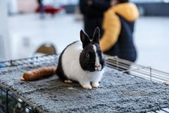 Big and small rabbits Stock Images