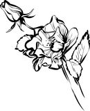 Big and small rose buds. Black and white big and small rose buds royalty free illustration