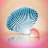 Big and small seashells Royalty Free Stock Photo