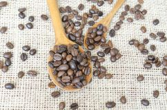 Big and small spoons filled with coffee beans Stock Images