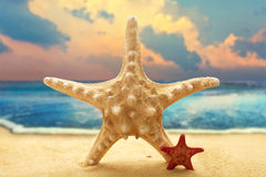 Big and small starfishes on ocean background Stock Photo