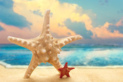 Big and small starfishes on the sandy beach Royalty Free Stock Images
