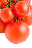 Big and small tomatoes  on branch isolated Stock Photos