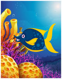 A big smiling fish near the coral reefs. Illustration of a big smiling fish near the coral reefs on a white background Royalty Free Stock Images