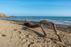 Big snag on the seashore. Big snag on the beach on a warm sunny autumn day in Odessa, Ukraine royalty free stock photography