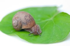 Big snail Stock Images