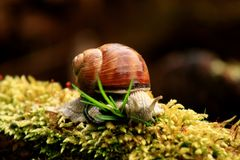 Big Snail Stock Photo
