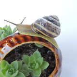 Big snail on a basket with flowers Royalty Free Stock Image