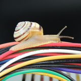 Big snail on the colored wires on a black background Stock Images