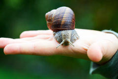 Big snail on a hand Royalty Free Stock Photos