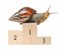 Big snail on podium. Isolated on white background Royalty Free Stock Image