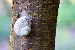 Big snail sitting on a tree trunk Royalty Free Stock Photography
