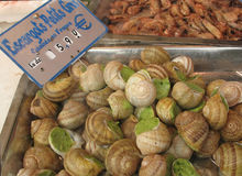 Big snails at market. Big snails, escargots, stuffed with green sauce, from a seafood market in Paris, France Royalty Free Stock Photo