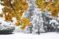 Big snow in autumn Stock Photo