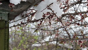 Big snow cap on the roof of the house on the corner of the house,Branches of a flowering apple tree stock video