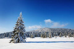 Big snow covered tree Royalty Free Stock Photos