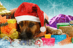 Big snowbound dog is waiting for christmas stock photo