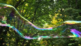 Big soap bubble against green tree. Colorful bubble flying in the air on the park, trees background. Lightness