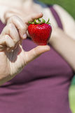 Big specimen of strawberry (63 grams) between woman's fingers Royalty Free Stock Photography