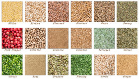 Big Spices And Herbs Collection Stock Photography
