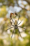 Big spider Royalty Free Stock Photos