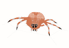 Big spider. A big garden spider on web Royalty Free Illustration