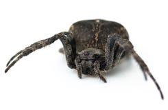 Big spider Stock Photo