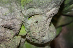 Big spider in cave stone rock tunnel gloomy dark green. Close-up Stock Image