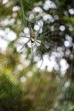 Big spider on cobweb Stock Photos