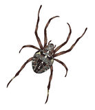 Big spider with cross-shaped drawing on a back. Illustration Royalty Free Stock Photos