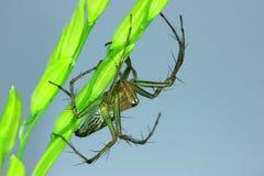Big spider on flower spikes. Stock Photo