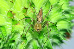 Big spider on flower spikes. Stock Photos