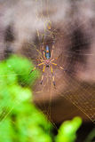 Big spider on his web closeup Royalty Free Stock Images