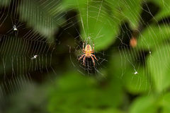 Big spider on hunt for insects royalty free stock photo