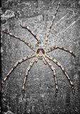 A big Spider stock photography
