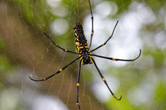 Big spider Stock Images