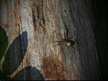 Big spider with a leave shadow Royalty Free Stock Photos