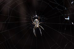 Big spider Royalty Free Stock Images