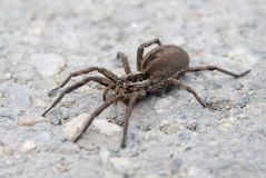 Big spider near a house Stock Photo