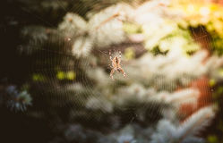 Big spider sitting on big web at forest Stock Photo