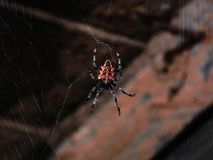 Big spider and spider web royalty free stock photo